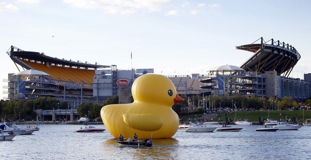 Duck passing Heinz Field