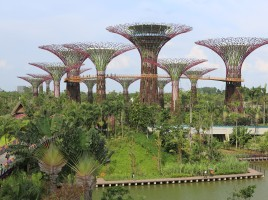 Supertree_Grove,_Gardens_by_the_Bay,_Singapore_-_20120712-02