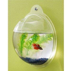 7seas-bubble-wall-fish-bowl
