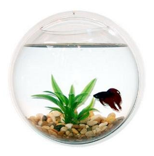 Wall-Mounted-Acrylic-Fish-Bowl