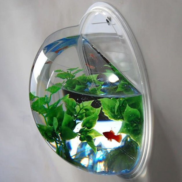 Wall-Mounted-Fish-Bowl-Aquarium