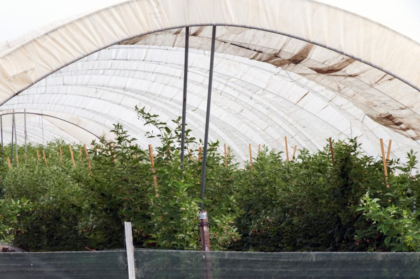 Agriculture Tent Free Stock Photo - Public Domain Pictures