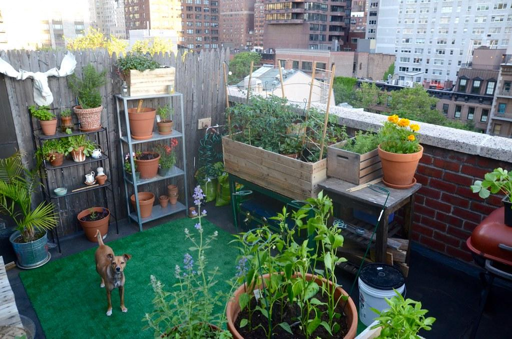 NYC Balcony Cocktail Garden | I live in NYC and grow an urba… | Flickr