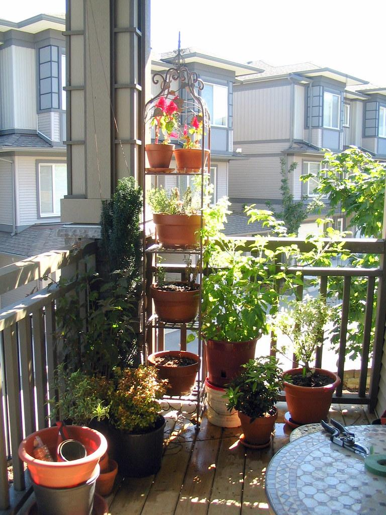 Our small balcony garden.jpg | Uploaded with the Flock Brows… | Flickr
