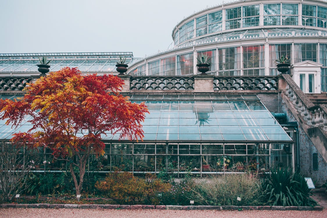 Modern glass greenhouse facade with plants